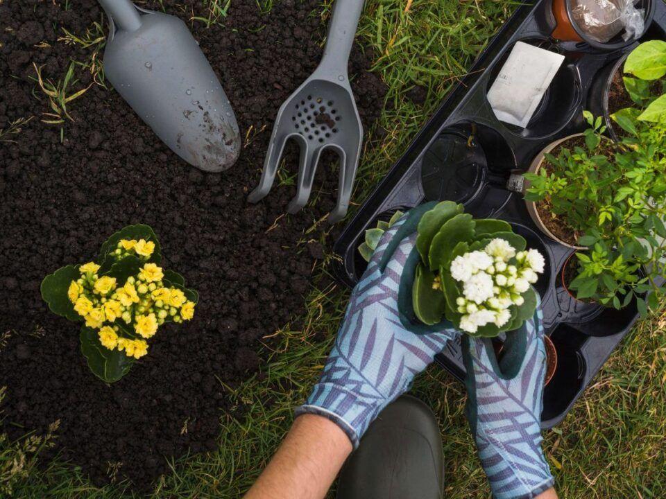 Dicas de jardinagem – Truques para aprender a cuidar do jardim