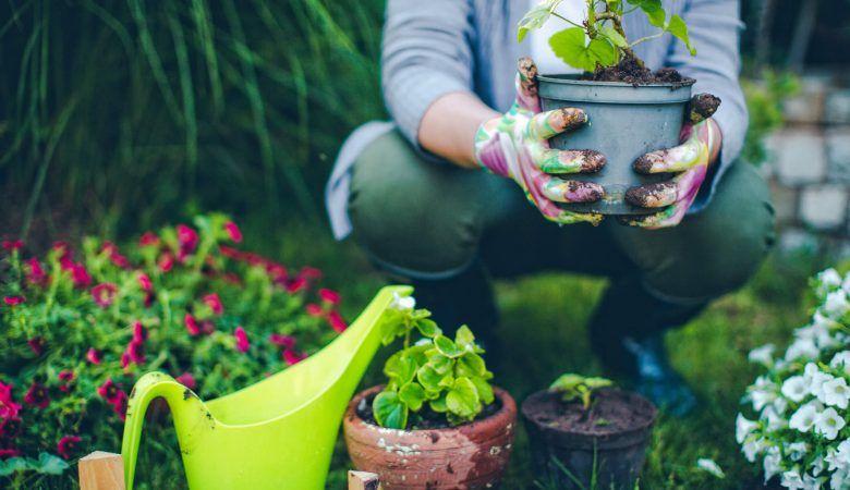 Dicas de jardinagem: truques para aprender a cuidar do jardim