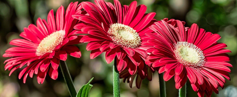 Flores do campo: um dos tipos de flores mais populares em buquês