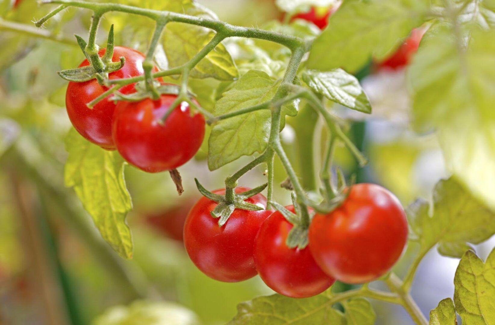 Horta em apartamento: como montar a própria horta e dicas de plantas para cultivar