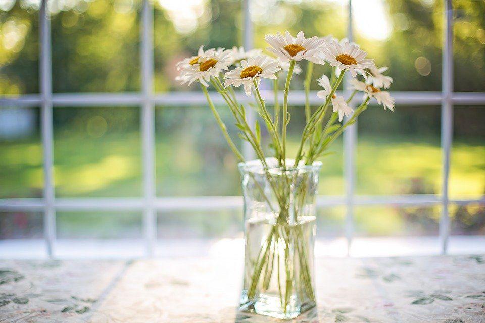Margarida: uma das flores mais populares no mundo todo pela delicadeza