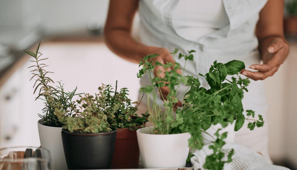Plantas difíceis de cultivar – Espécies que exigem mais cuidados
