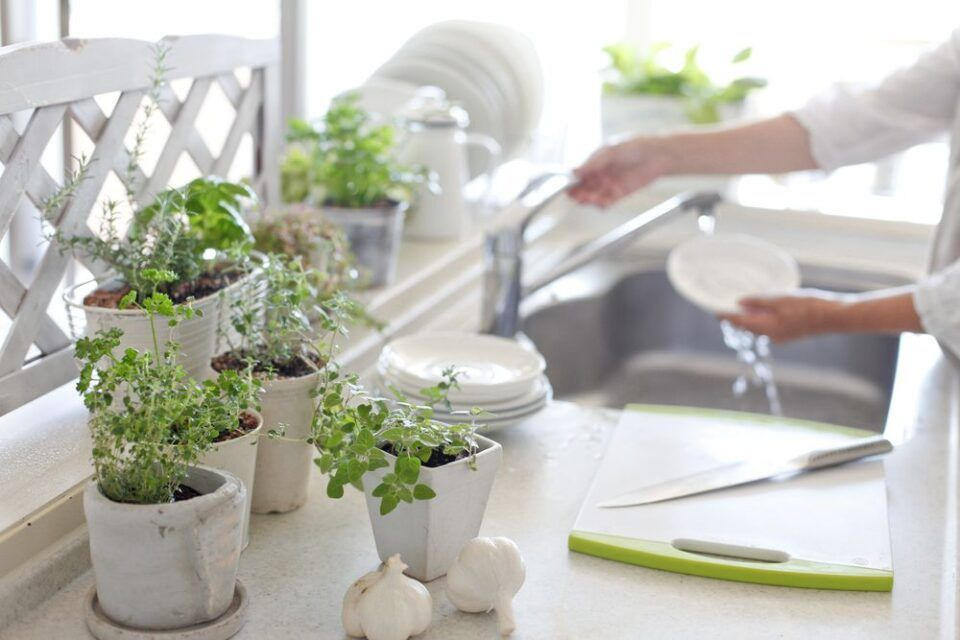 Plantas para cozinha – Sugestões de espécies para cultivar nesse ambiente