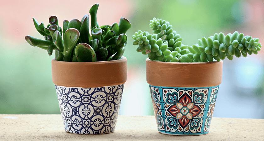 Plantas para cozinha: sugestões de espécies para cultivar nesse ambiente