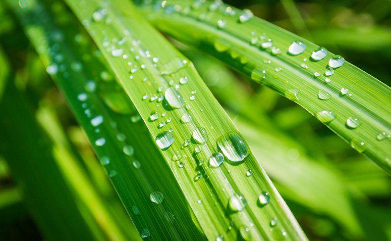 Repelentes naturais: espécies de plantas capazes de afastar insetos