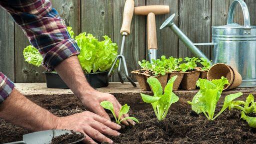 Substrato para plantas: o que é e dicas de como escolher o melhor tipo