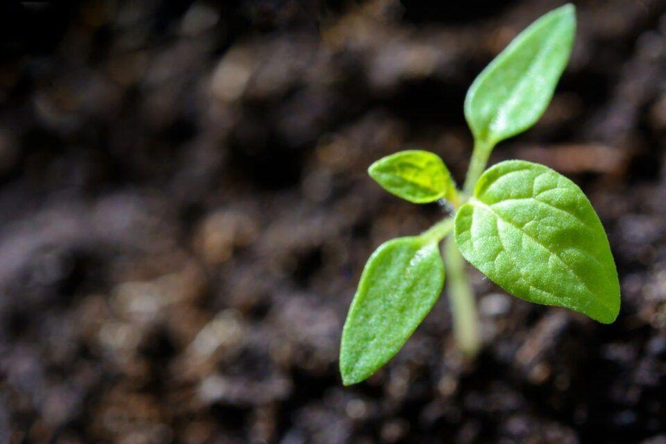 Substrato para plantas – O que é e dicas de como escolher o melhor tipo