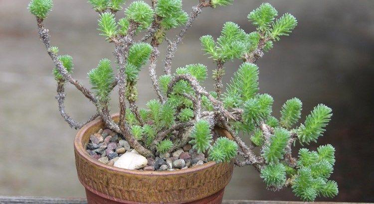 Tipos de suculentas: plantas adaptáveis e versáteis para a decoração