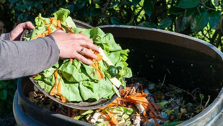 Adubo orgânico: como produzir e utilizar seu próprio adubo orgânico