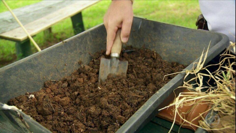 Adubo orgânico – Como produzir e utilizar seu próprio adubo orgânico