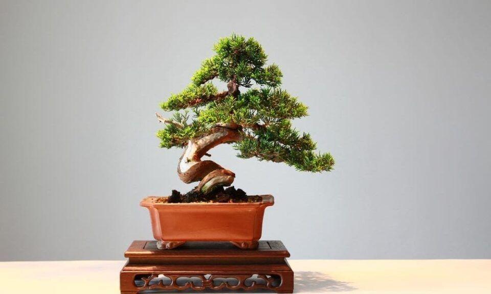 Como fazer bonsai – Surgimento da técnica e características