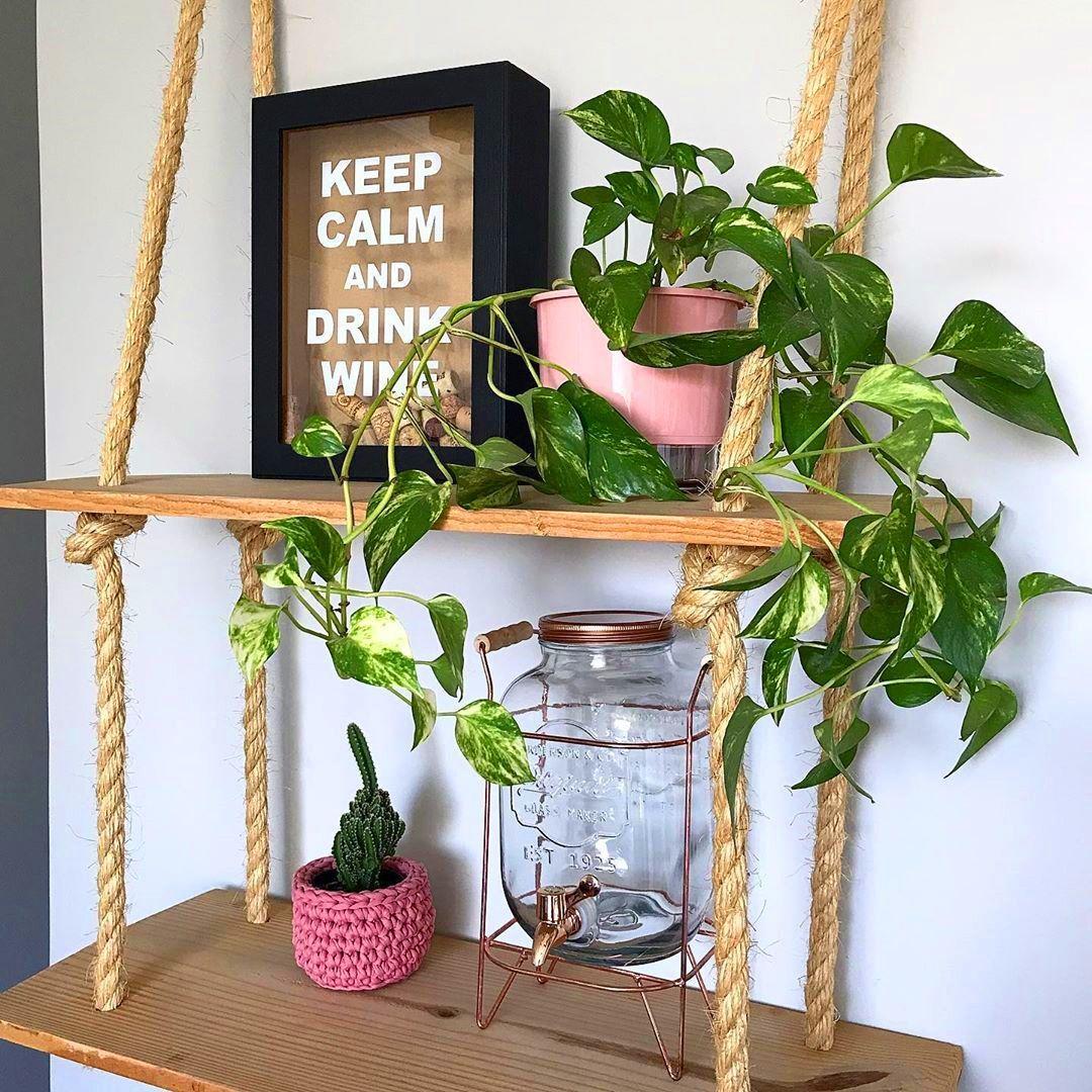 Como fazer muda de jiboia: uma das plantas queridinhas do momento