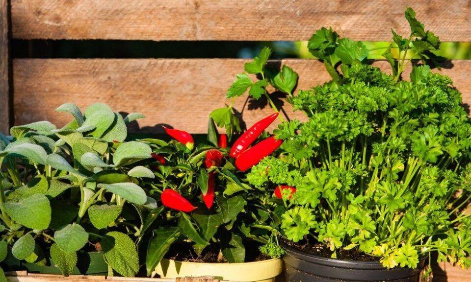 Ervas aromáticas – Espécies mais populares e como utilizá-las