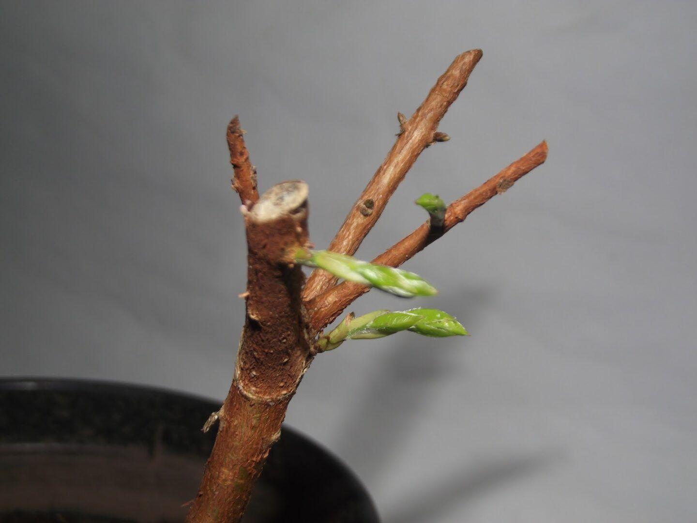 Estaquia: conhecendo a técnica de plantar usando estacas