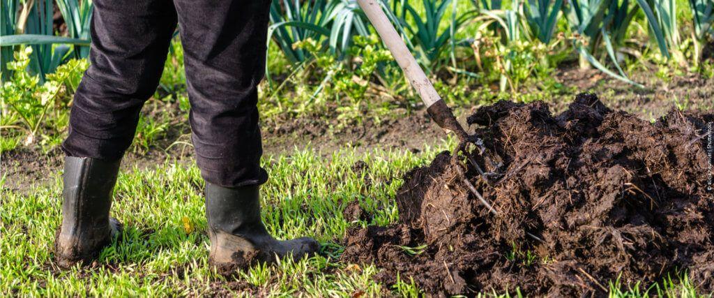 Fertilizantes: o que são e os principais usos na agricultura e na jardinagem