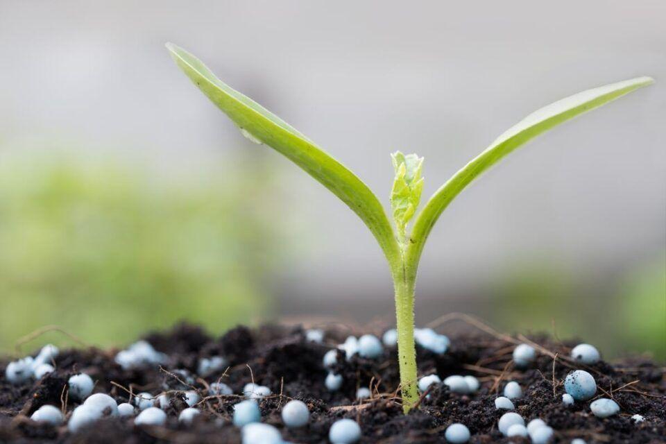 Fertilizantes, o que são? Principais usos na agricultura e na jardinagem
