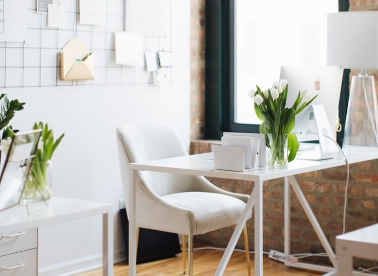 Plantas para escritório: as melhores opções para esse espaço
