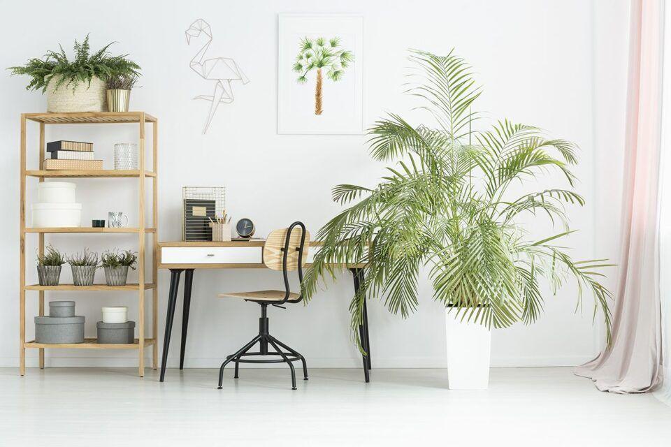 Plantas para escritório – Melhores opções, como cultivá-las e cuidados