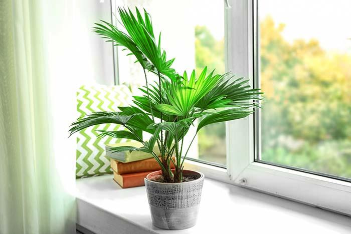 Plantas para sala: sugestões de especies fáceis de manter em casa