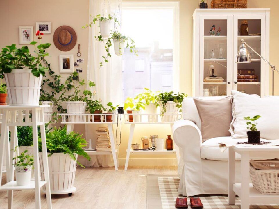 Plantas para sala – Sugestões de espécies fáceis de manter em casa