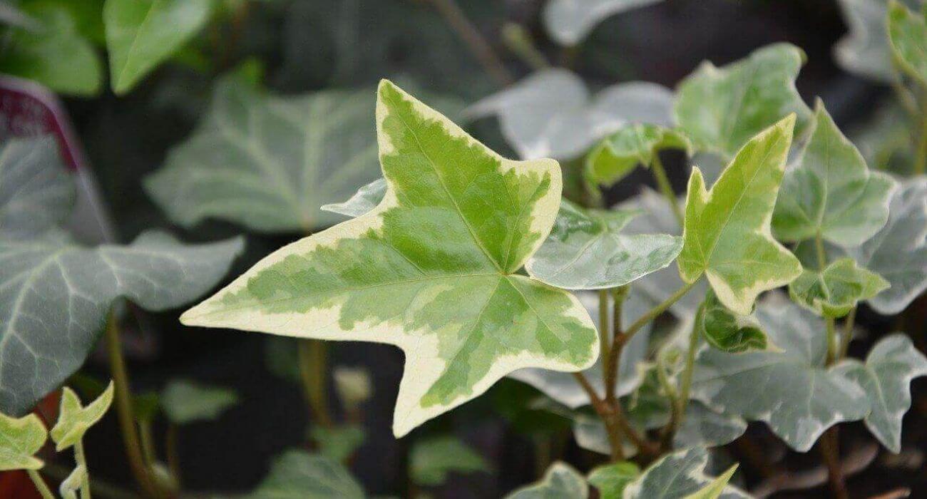 Plantas que crescem rápido: lista com algumas espécies