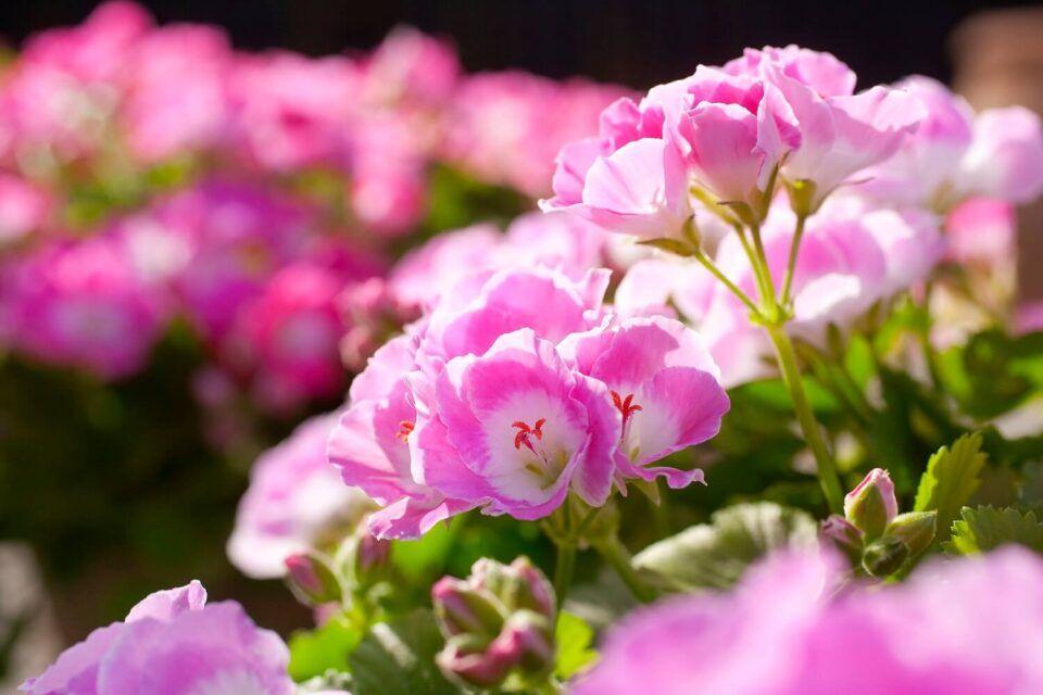 Plantas que crescem rápido – Principais espécies e características
