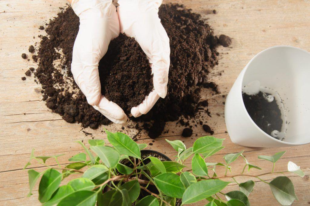 Tipos de substrato: o que é e quais os tipos mais comuns