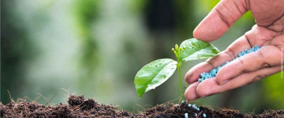Adubo para jardinagem – Importância de usar adubo para as plantas