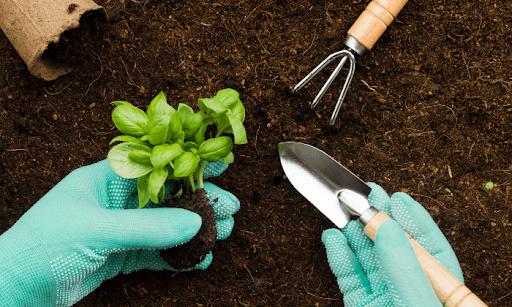 Adubo para jardinagem: qual a importância de usar adubo para as plantas