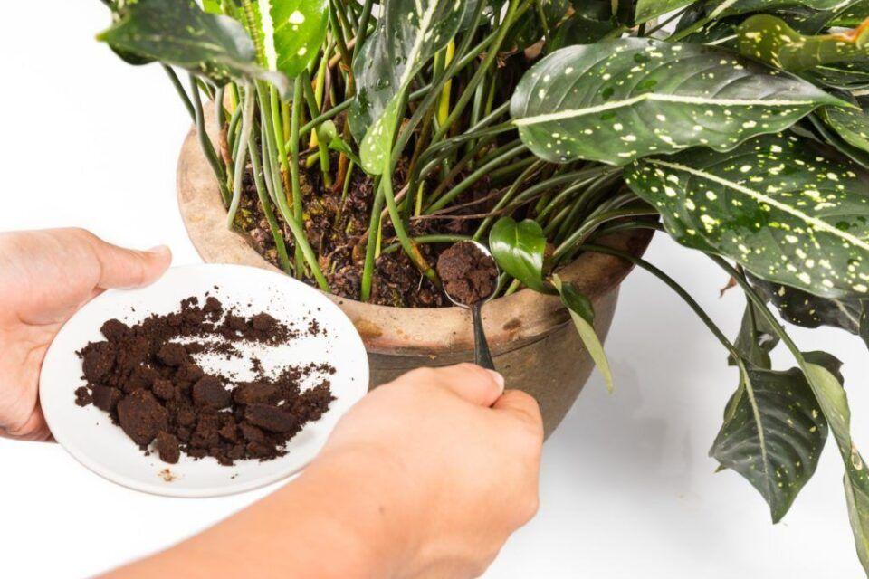 Borra de café nas plantas – Como utilizar e principais benefícios