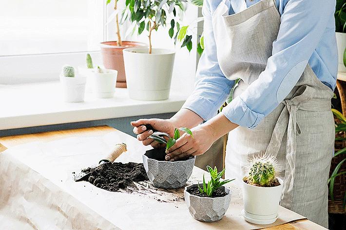 Borra de café nas plantas: quais os principais usos e maior benefício