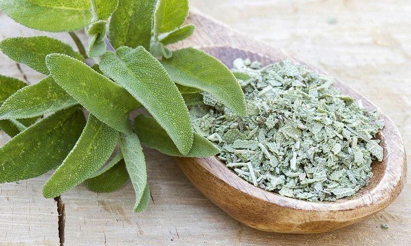Como plantar sálvia: tempero popular em receitas salgadas