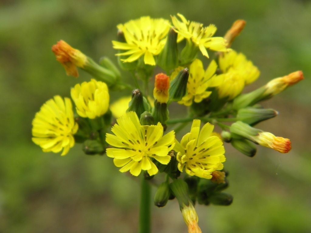 Ervas daninhas: espécies mais populares e como fazer o controle