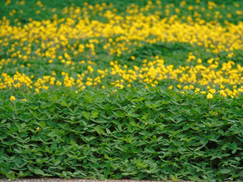 Forrações: o que são e como usar esse tipo de vegetação no paisagismo