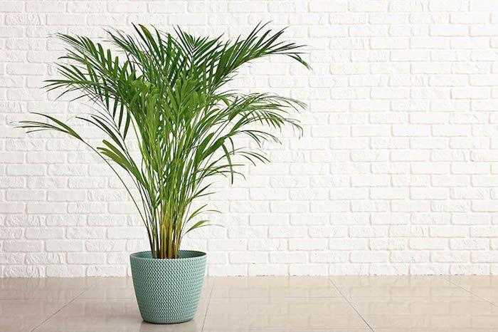 Plantas para quarto: lista com espécies para a decoração