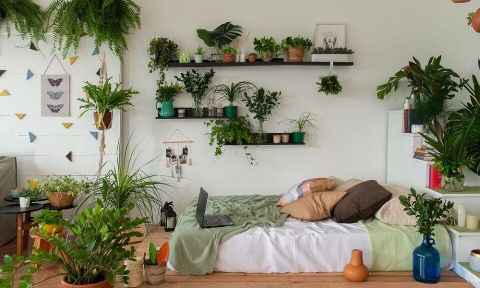 Plantas para quarto – Espécies que podem ser utilizadas na decoração