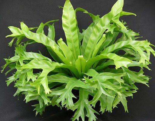Tipos de samambaia: uma das plantas mais populares no Brasil