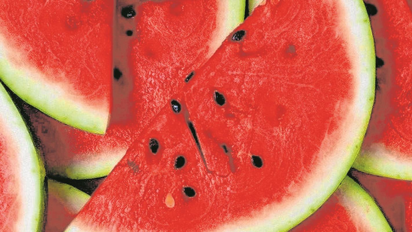 Como germinar sementes: tipos de semeadura e plantas fáceis de semear