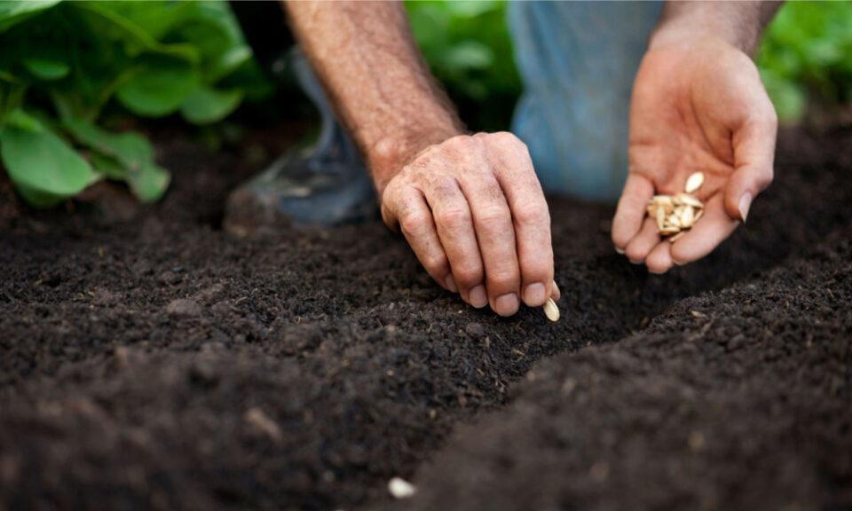 Como germinar sementes – Tipos de semeadura e plantas para semear