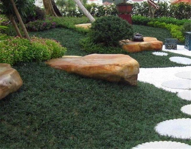 Grama preta: como utilizar esse tipo de vegetação no jardim