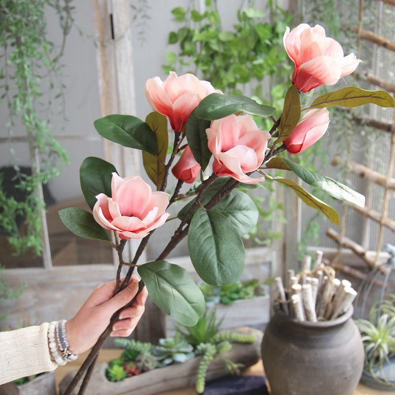 Magnólia: flores com significados e inúmeras espécies