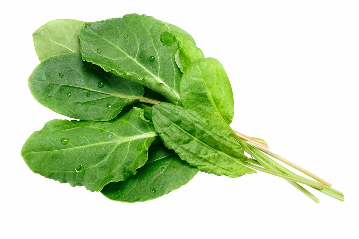 PANCS: o que são plantas alimentícias não convencionais?
