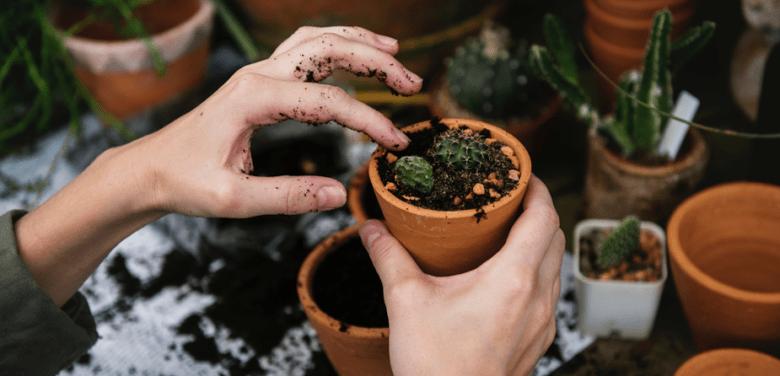Regar plantas: dicas para manter suas plantas bonitas e saudáveis!