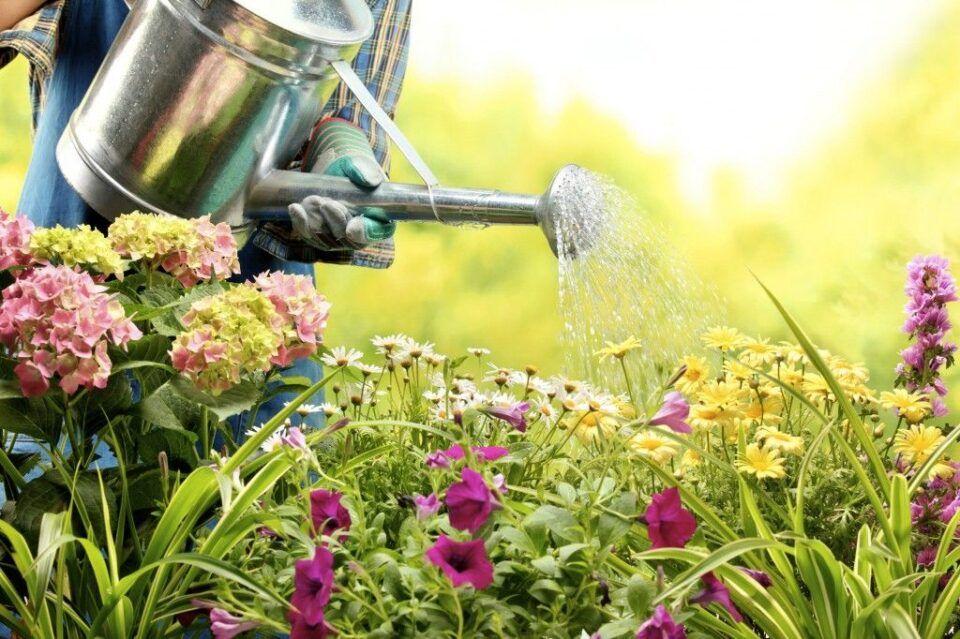 Regar plantas – Dicas para manter suas plantas bonitas e saudáveis