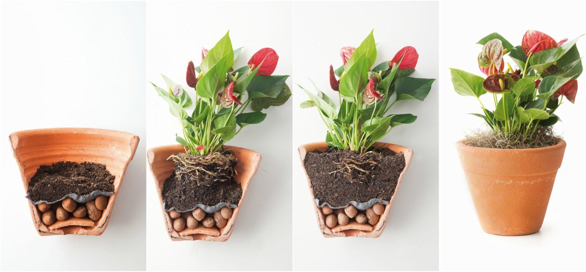 Argila expandida: o que é e como utilizar esse item na jardinagem