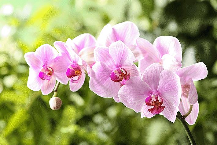 Como plantar orquídea: formas de propagação da flor