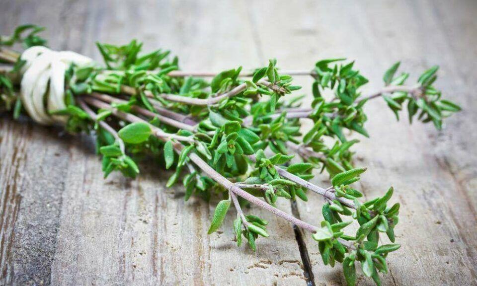 Como plantar tomilho: formas de plantio e como cultivar