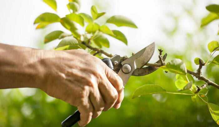 Planta murcha: como cuidar de plantas nesse estado
