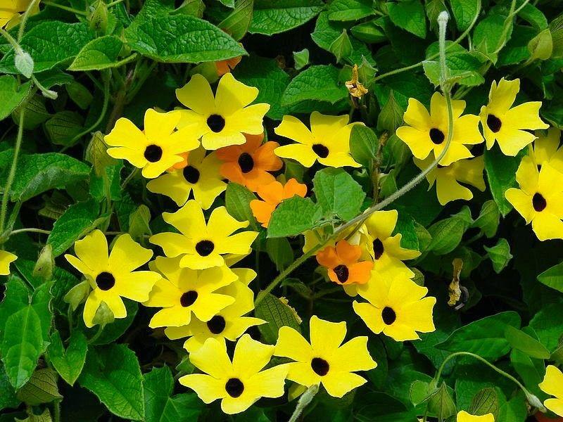 Plantas pendentes de sol: sugestões para a decoração suspensa