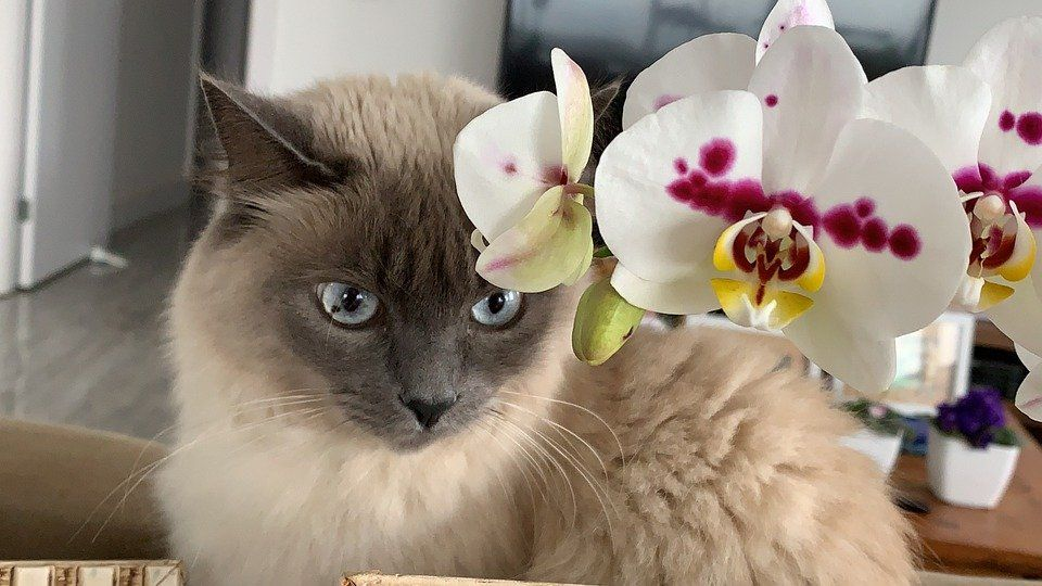 Plantas seguras para gatos: algumas plantas não tóxicas para os pets